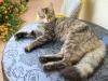 Kot znaleziony przed domem w Dubrovniku