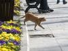 Stambuł - Koty, wszędzie koty :)